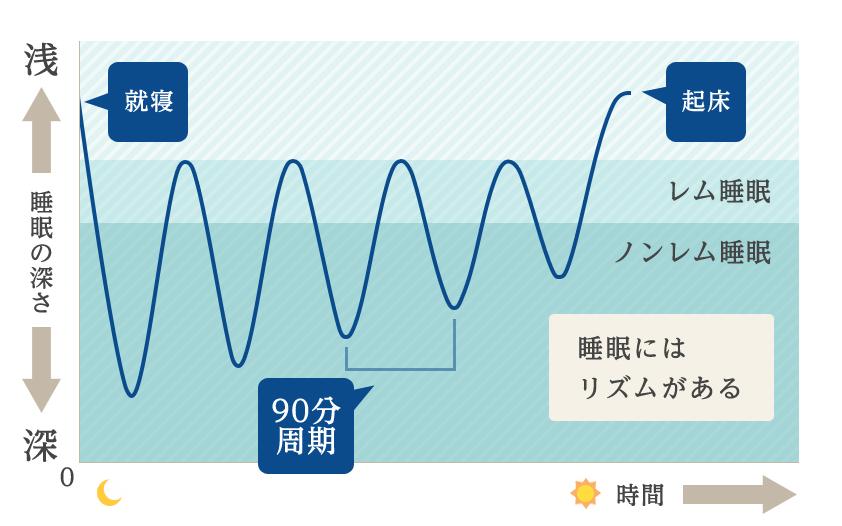 レム睡眠とノンレム睡眠の周期の図