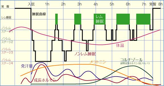 睡眠の周期について